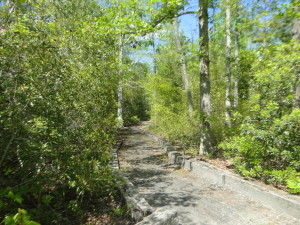 The Preserve Nature Trails